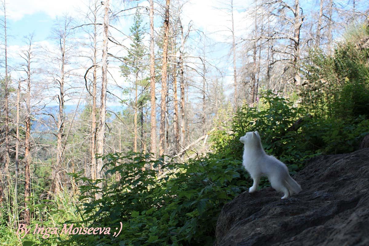 Лютоволк Призрак, Ильменские горы