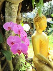 Цветы таиланд Wat Khun Kharam Samui храм кхун кхарам