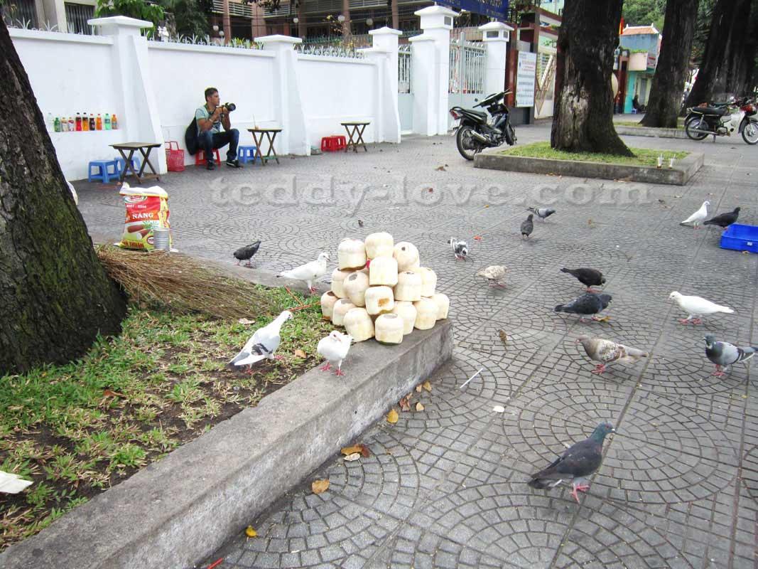 Около Нотр Дам Де Сайгон можно выпить кокосик