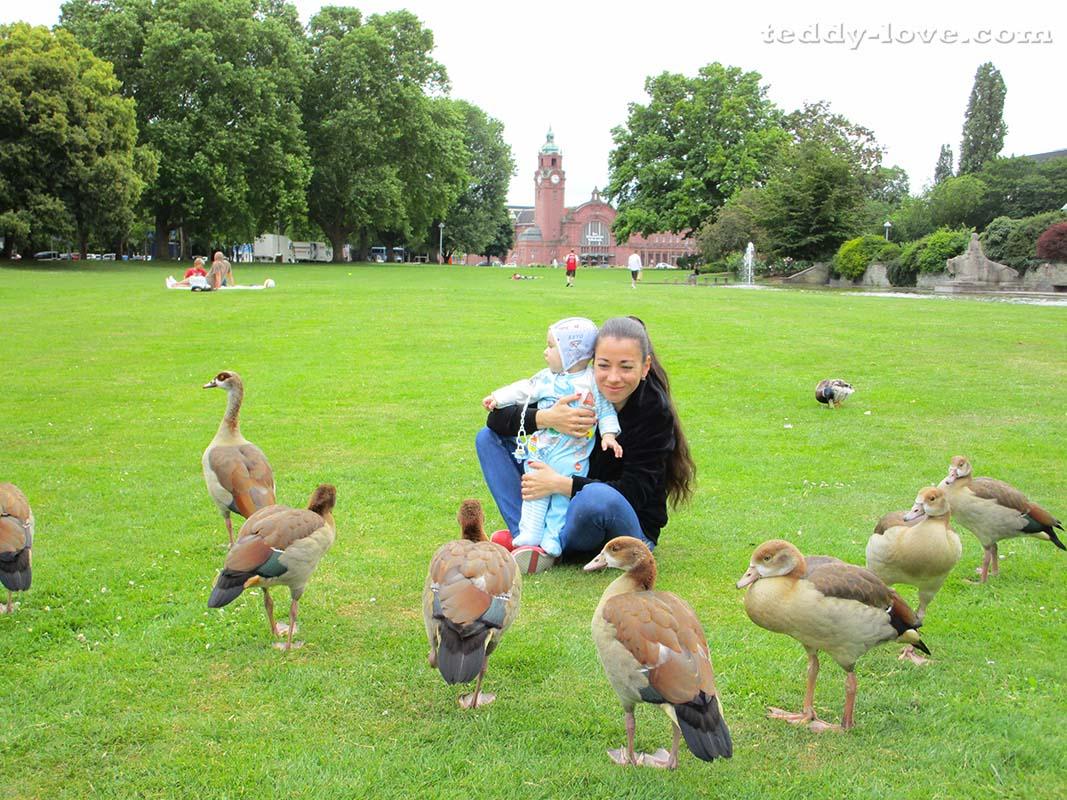 Голодные птахи