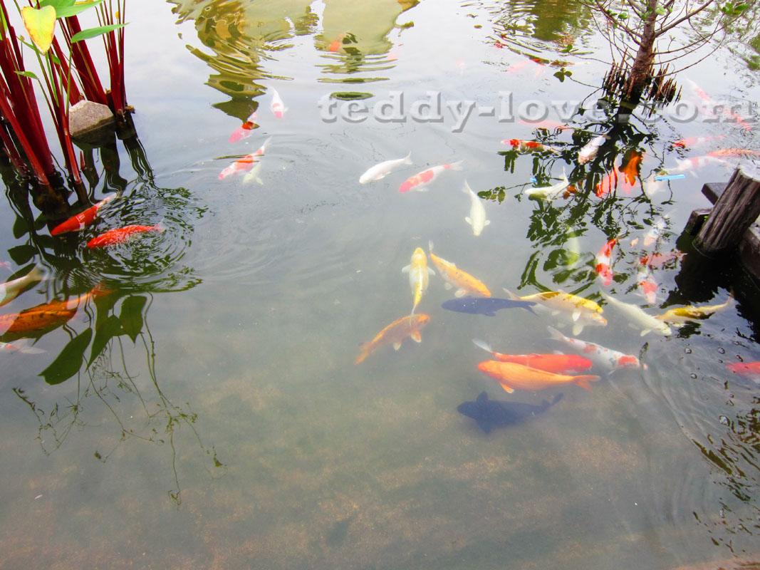 Рыбок можно покормить.В Парке Dream World