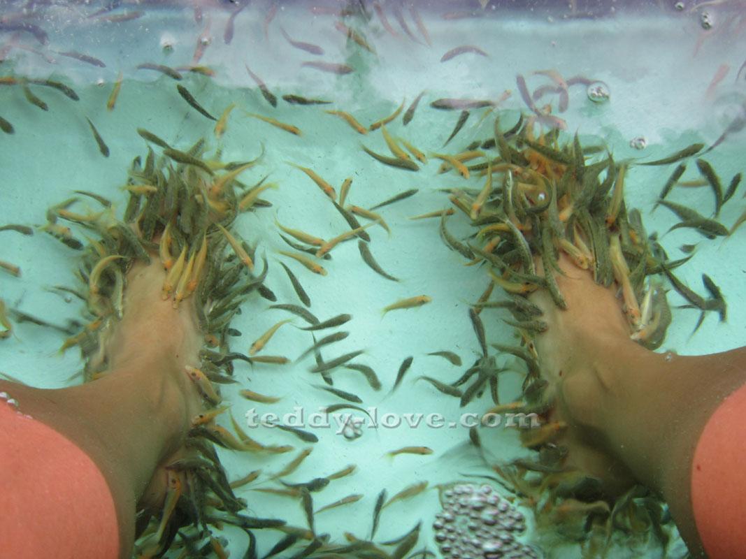 Пилинг ног рыбками Гарра Руфа