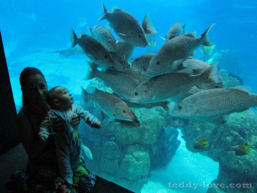 Любопытные рыбки