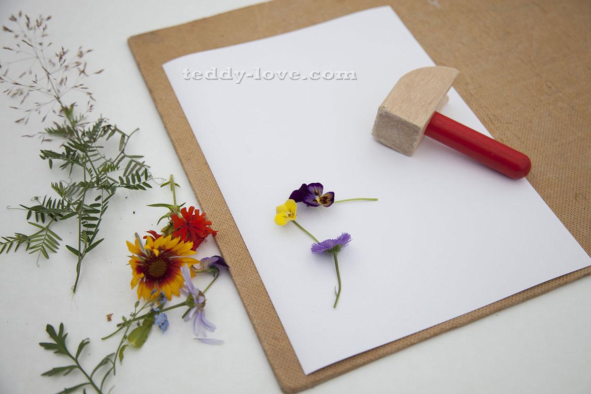 Как сделать гербарий из цветов своими руками фото пошагово