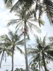 Кем можно работать в Таиланде, кем нельзя работать в Таиланде, список разрешенных профессий в Таиланде