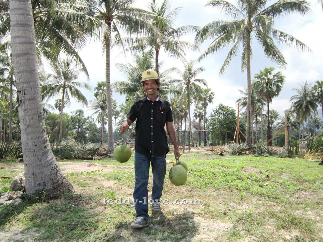 Сборщик кокосов в Таиланде
