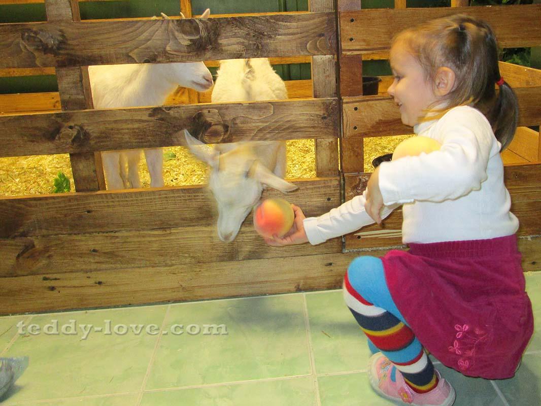 Дочка упорно пыталась накормить козу пластмассовыми фруктами. Коза была против)