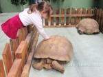 Куда пойти с детьми в Петербурге: Контактный зоопарк!