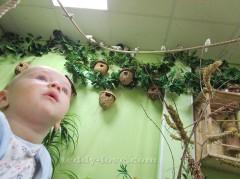 Куда пойти с ребенком в СПб - Музей Бабочек