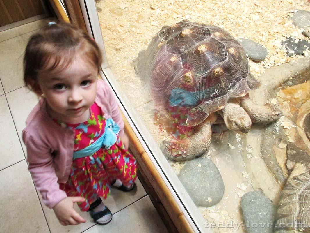 Амелия и черепаха с Амелию