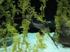 Маленький морской конек