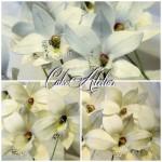 orhideya_iz_mastiki_master_klass_2