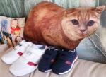 Отзыв об обуви Фаберлик