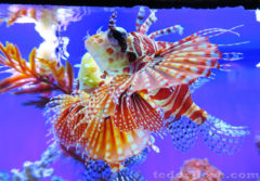 Красивые рыбки)