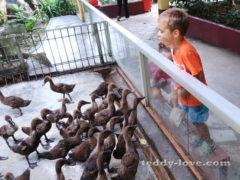 Отзыв о Парке Дикой Природы Лангкави 2019 Достопримечательности Лангкави для детей