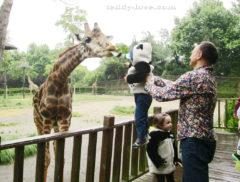 Кормим жирафа с рук!