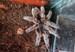 Отзыв о выставке ядовитых пауков в Лесном Посольстве СПБ