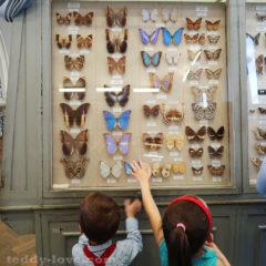 Огромнейшая коллекция бабочек