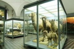 Много-много животных в музее