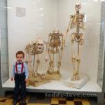 Отзыв зоологический музей с детьми в СПБ Петербург куда пойти с детьми