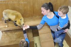 otzyiv_kontaktnyi_zoopark_strana_enotiya_piterlend_spb_15
