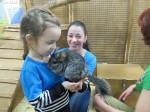 Отзыв о контактном зоопарке страна енотия в питерленде, куда пойти с детьми в петербурге в трогательный зоопарк