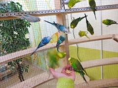 Отзыв о контактном зоопарке Лесное посольство