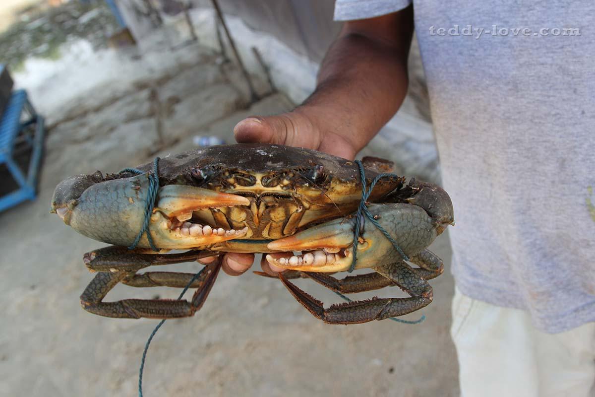 Морепродукты показывают перед тем, как приготовить