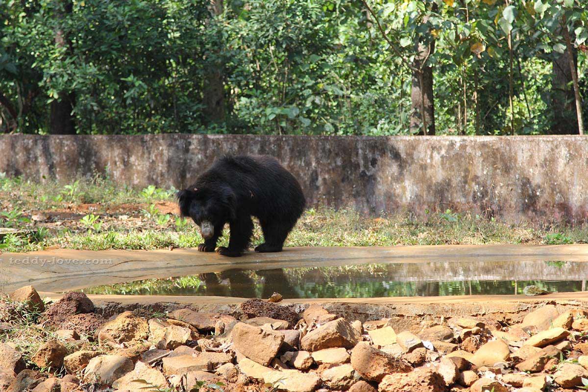 Зоопарк на Гоа