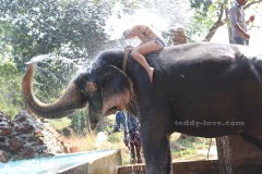 """На экскурсии """"Специи"""" за доп плату можно принять душ со Слоном"""