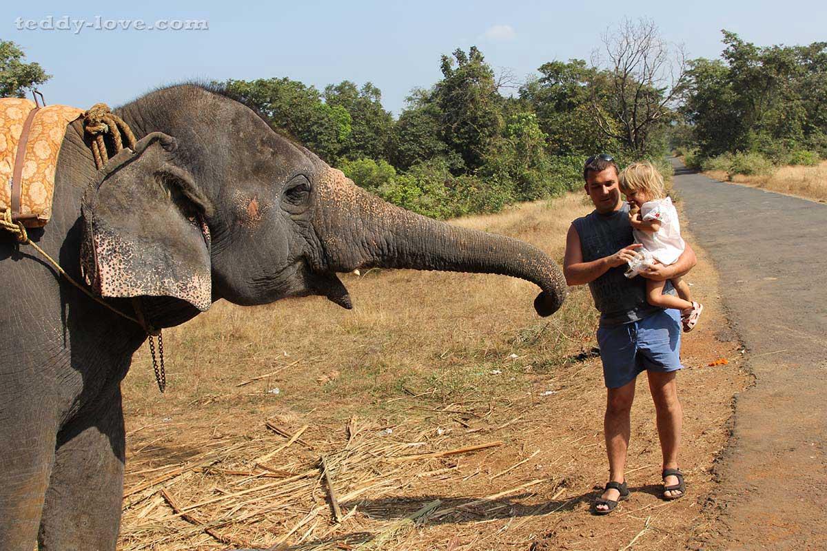 Кормление слоника