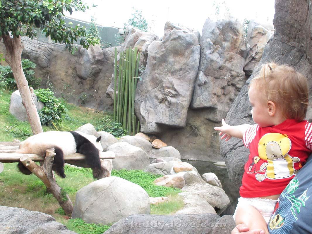 Не помню точно, именно эта панда из Океанпарка или у Большого Будды была)))