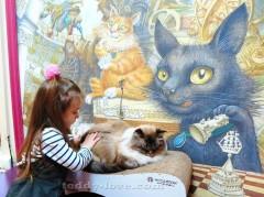 Республика кошек СПБ отзыв