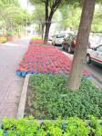 цветы, Сайгон, хо ши мин, улицы Сайгона
