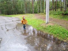 По дороге на залив в дождь)