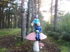 Набрали брусники на территории)