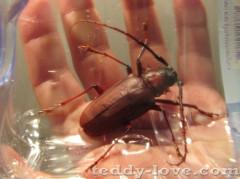 Насекомые Таиланда, опасности в Таиланде, домашние животные таиланда, жуки таиланда, насекомые на самуи