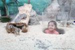 Зоопарк в Рио - Экзоопарк 2018! отзыв фото цены