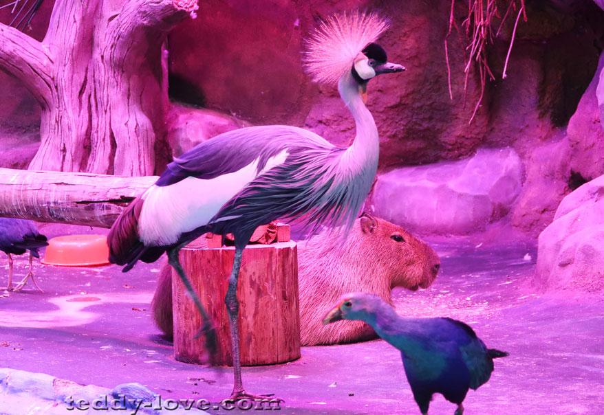 Секс мулфиме птиц рио